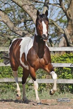 PAINT HORSE (2).jpg