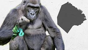 Aborto-capricho-gorila-y-burgués-en-imag