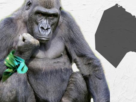 Aborto: capricho gorila y burgués