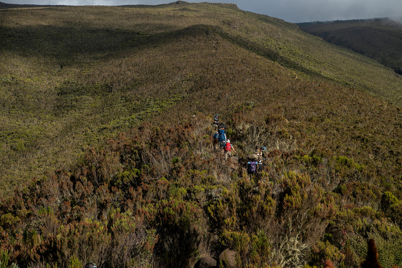 KCC team members will trek a total of 44 miles on the Lemosho Route. This long and remote route to the peak of Kilimanjaro will take them though rain forest, moorlands and heather, alpine deserts and arctic icy landscapes while facing extreme weather change.