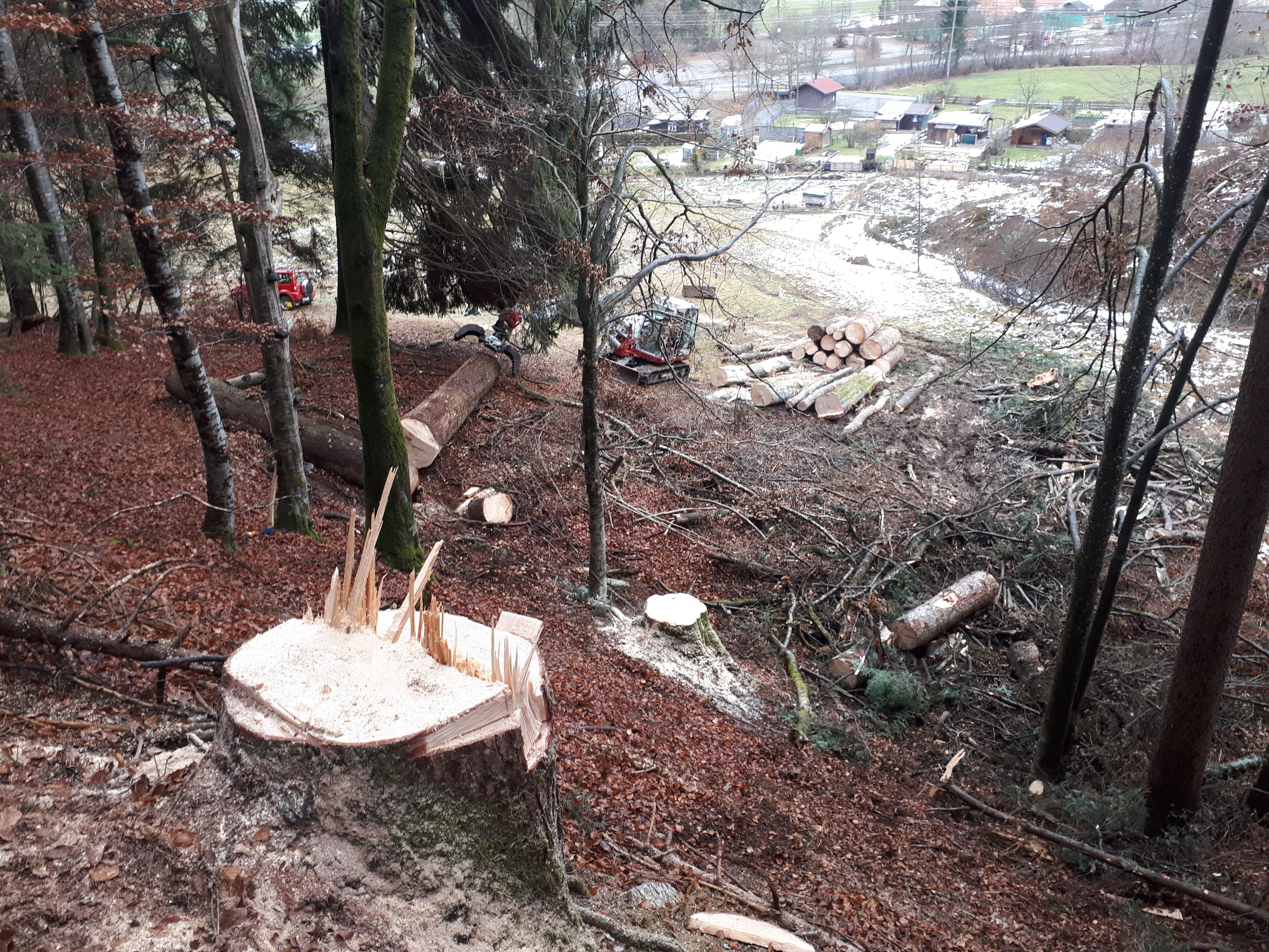 Holzeinschlag im eigenen Wald 1