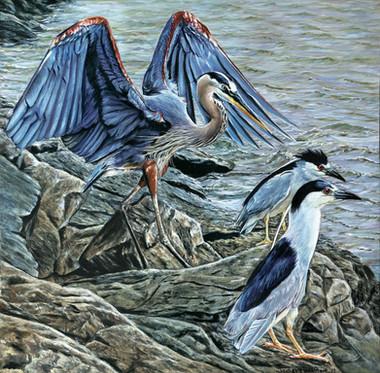Herons and company