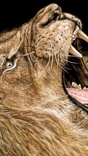 Le lion #1