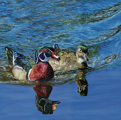 Couple of Wood Duck