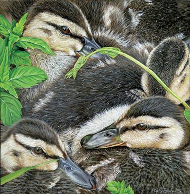Confinement de canards