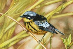 Common Warbler
