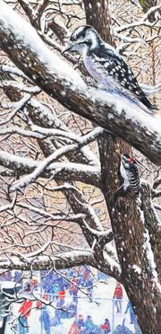 Woodpecker's school