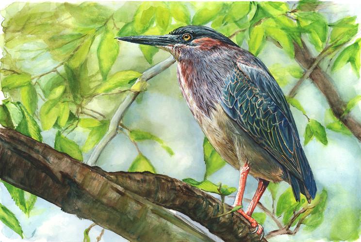 WATERCOLOR'S BIRDS