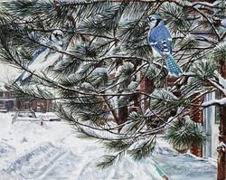 Le pin bleue