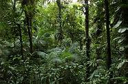 CONHEÇA OS BOIS DE PARINTINS COM A AMAZON DESTINATIONS