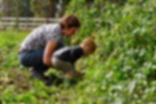 Harvesting vegetables on The Omstead Farm in Armstrong, BC