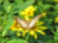 Butterfly - Beverly Rupany.jpg
