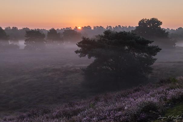 Westruper Heide-L1030773-Aug. 19 2020.jp