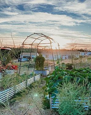 Current Golden Hour Garden views 🌿... w