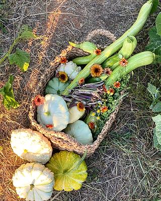 harvest 5.png
