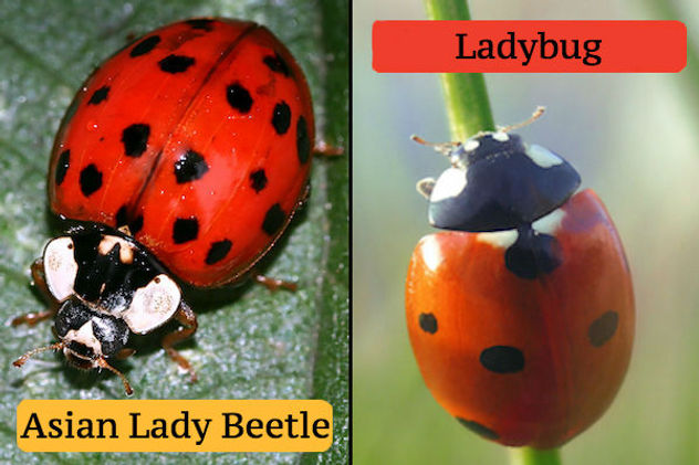 ladybug-v-alb.jpg