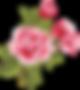 pink-rose-clip-art-7TaKyynqc.png