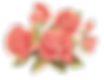 coral roses.png