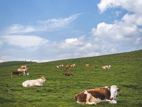 Proyecto: Beef