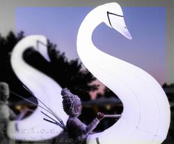 Curious Bubbles - Swans at sunset