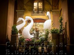Curious Bubbles - Swan Gods -