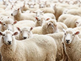 The Good Shepherd (English & Kreyol)