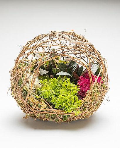 grapevine-container-garden-wholesale.jpg