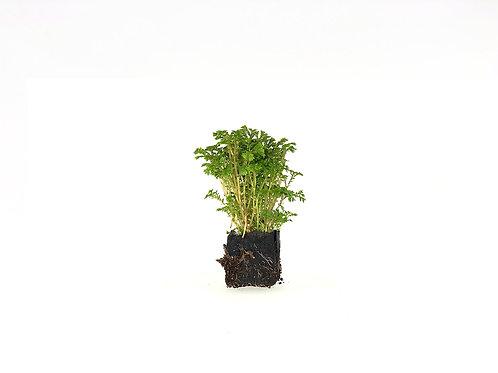 Avatar Moss