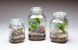 terrarium-mason-jars-wholesale