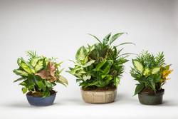 dish-gardens-wholesale