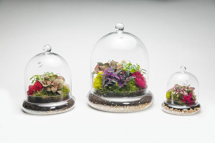 cloche-terrarium-wholesale.jpg