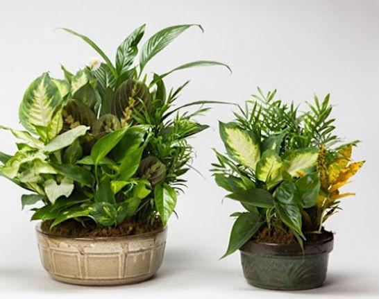 lindel-ceramic-dish-gardens-wholesale.jp