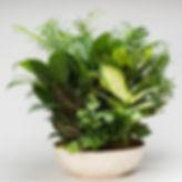 dish-gardens-wholesale.jpg