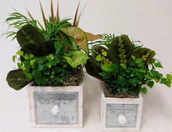 wooden-container-gardens-wholesale