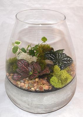 9 Jardiniere Terrarium- with 3     plant