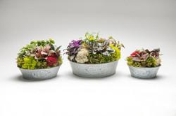 fairy-gardens-wholesale