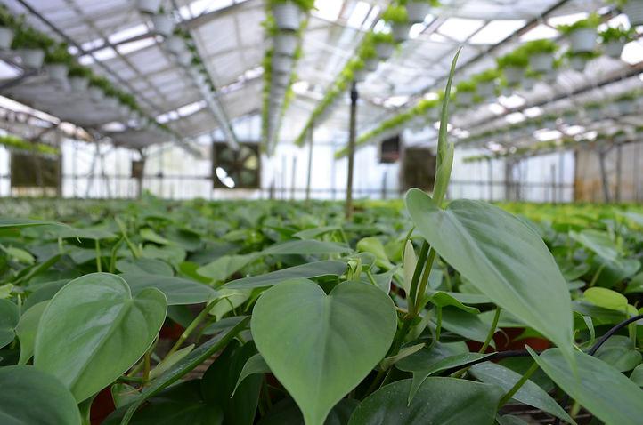 Plants in a Wholesale Nursery