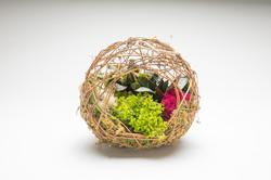 novelty-dish-gardens