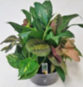 9 inch foliage centerpiece dish garden l