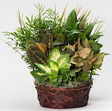 wicker-dish-garden-wholesale.jpg