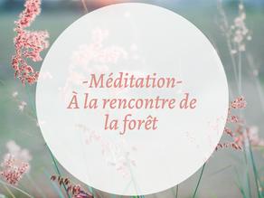 Méditation : à la rencontre de la forêt