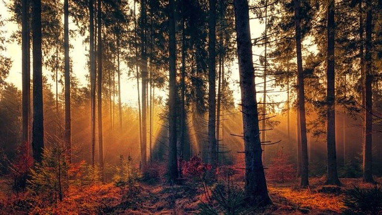forest-3392077_640.jpg
