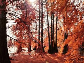 Préparer l'arrivée de l'automne en naturopathie