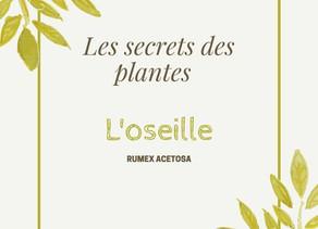 Secret de plante : l'oseille