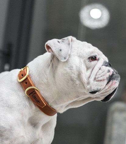 DOG COLLAR CRAFT