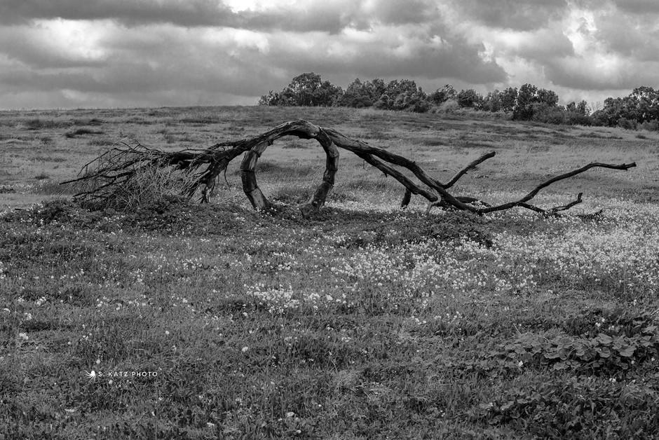 Wooden-Ring.jpg