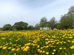 meadow_farmhouse