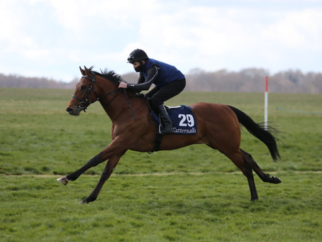 Cotai Glory averages 100,000gns at Tatts Craven Breeze-Up