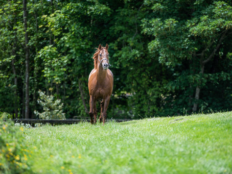 """""""I've such faith in Cotai Glory that I've backed him to be top first-crop sire"""""""