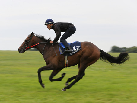 Tally-Ho breezer becomes 10th stakes winner for Mehmas